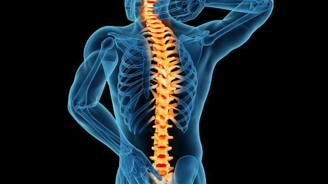 Why Is Our Spine So Important?